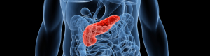 pancreas_banner_highlight